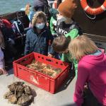 UoK-Woche-2-Vogelkoje-Adler-Seetierfang-an-Bord