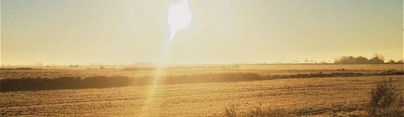 Sonne über einem Feld