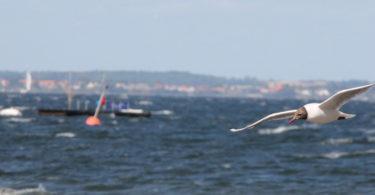Impressionen Nordsee und Küste